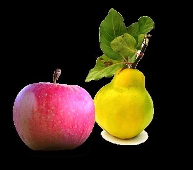 Apfel Quitte